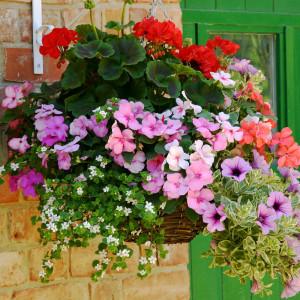 June hanging basket flowers