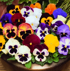 March and October - pansies